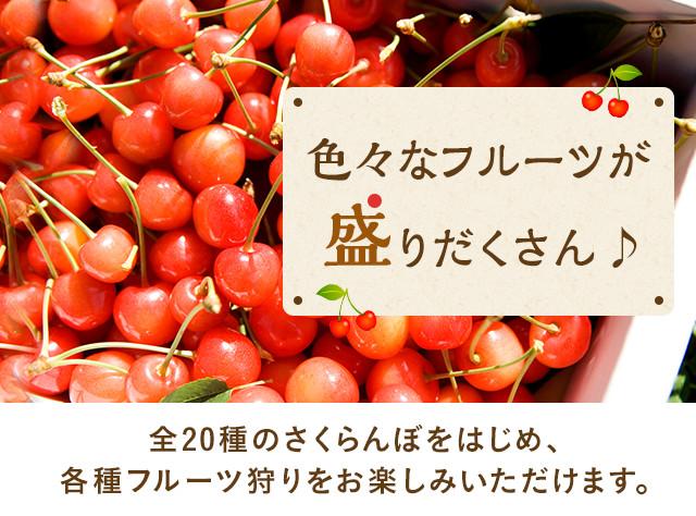 色々なフルーツが盛りだくさん
